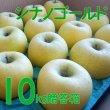 画像1: りんご シナノゴールド 贈答品 10キロ箱サイズ 【送料込み】 (1)